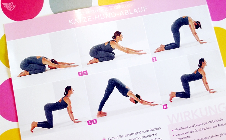 yoga-katzehundeablauf