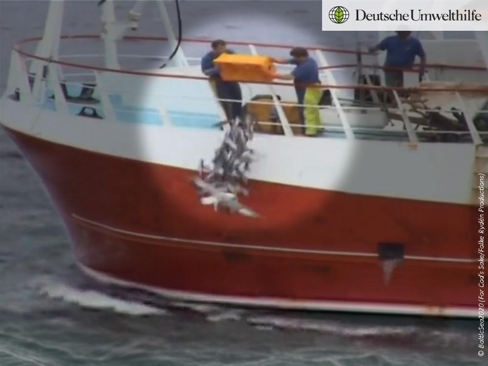 illegale Fischrückwürfe